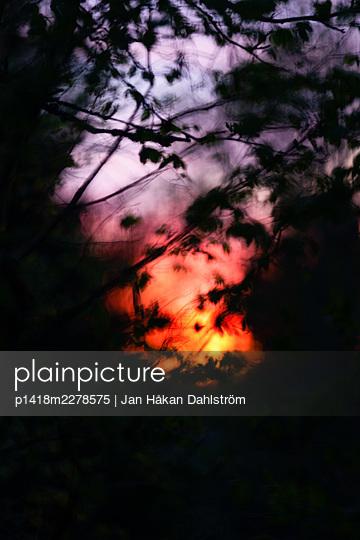 Sunset behind trees - p1418m2278575 by Jan Håkan Dahlström