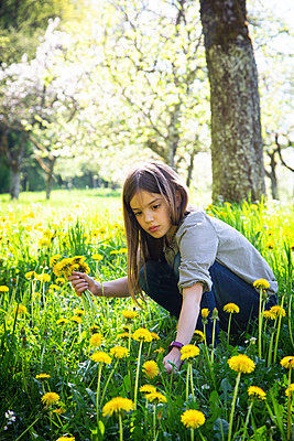 Portrait of girl picking dandelions on a meadow - p300m2188880 by Larissa Veronesi