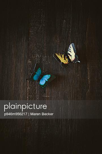 Zwei Schmetterlinge auf einem Tisch - p946m956217 von Maren Becker