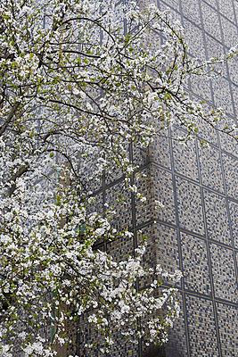Fassade - p1075m1011483 by jocl