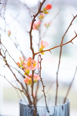 Blüten und Dornen - p454m2204145 von Lubitz + Dorner