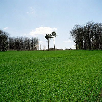 field and trees (corrèze)  - p5671248 by Franck Juery