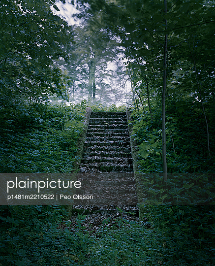 Autumn leaves on deserted steps in the woods - p1481m2210522 by Peo Olsson
