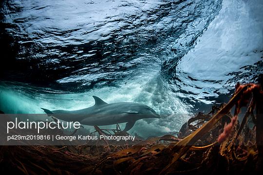 p429m2019816 von George Karbus Photography