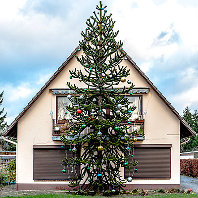 Christmas tree in front of single-family house - p1523m2064371 by Nic Fey