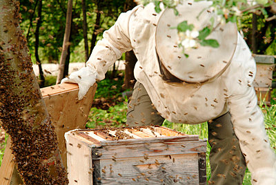 Beekeeper with a beehive - p2350551d by KuS