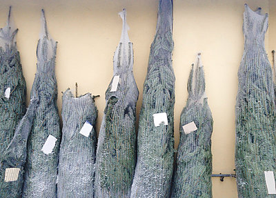 Christmas, Christmas trees for sale, Austria - p300m1009519f by Dieter Schewig