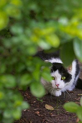 Katze unter einem Rhododendronbusch - p739m907024 von Baertels