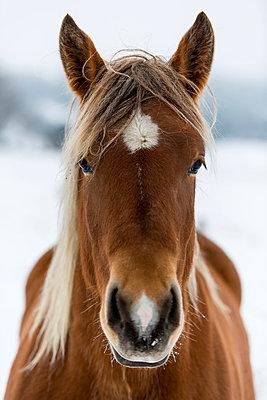 Pferdekopf - p829m949342 von Régis Domergue