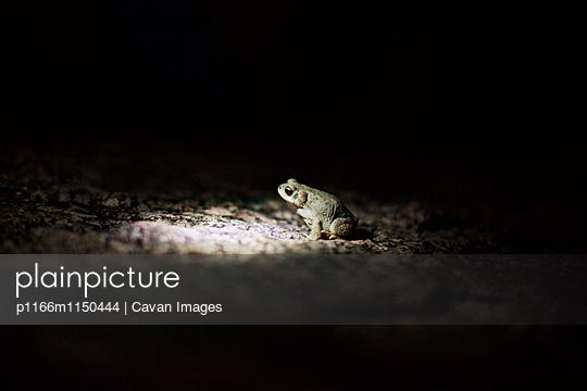 p1166m1150444 von Cavan Images