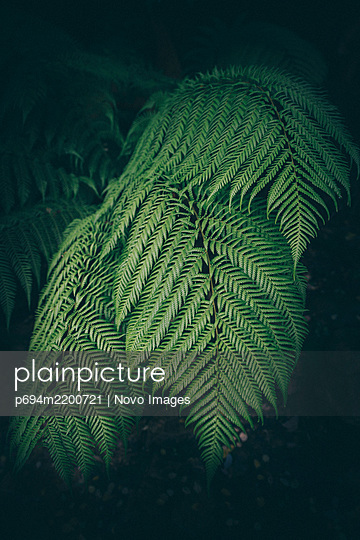 Detail of Green Fern Leaf - p694m2200721 by Novo Images
