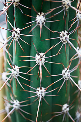Cactus - p1038m901131 by BlueHouseProject
