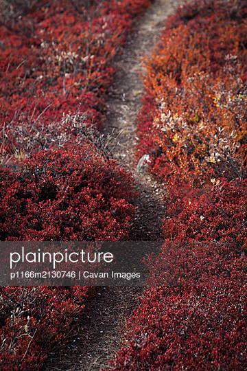 Path through field full of vibrant coloured fall foliage - p1166m2130746 by Cavan Images