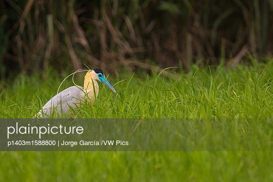 p1403m1588800 von Jorge García /VW Pics