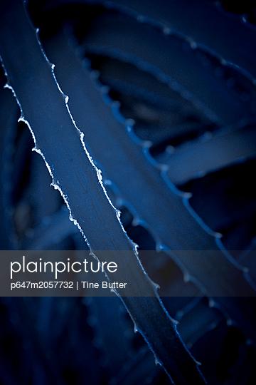 Agave in blau - p647m2057732 von Tine Butter
