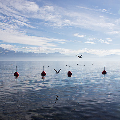 Red buoys and seagulls at Lake Geneva - p1138m1221990 by Stéphanie Foäche