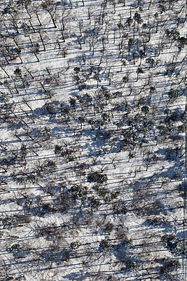 Aerial view snowy forest of trees - p301m2016430 by Stephan Zirwes