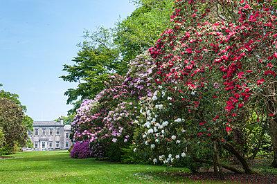 Trewithen Gardens, near Truro, Cornwall, England - p652m972017 by Paul Harris photography